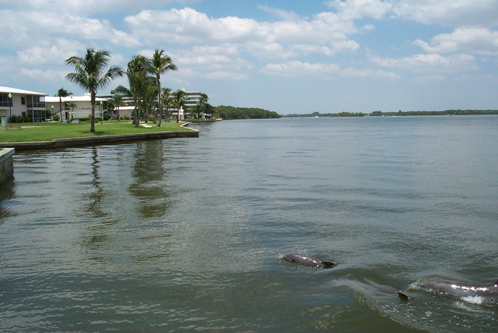 Shell Point plays hosts to manatees, dolphins and tropical birds.